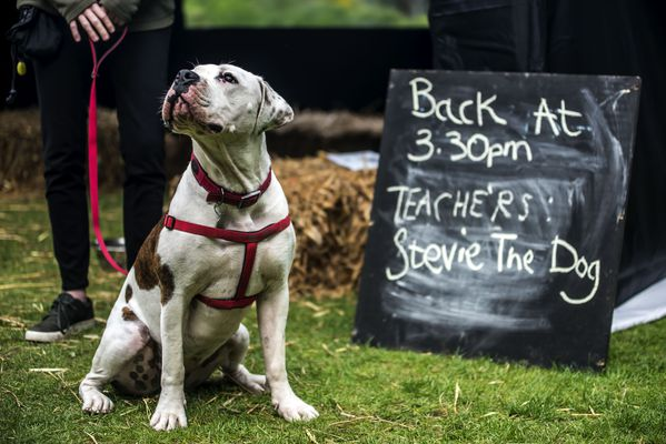 A dog sits infront of a blackboard which reads 'Back at 3.30pm - Teacher's Stevie the dog'